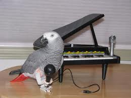 Bird with microphone and piano