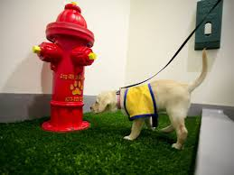 Dog potty at airport