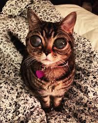 Alien Eyes Cat