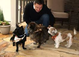 Aloft Hotel Dogs