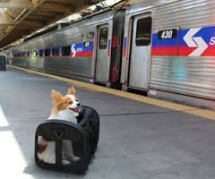 Dog on train platform
