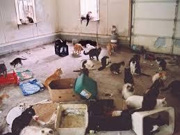 Cat Hoarding
