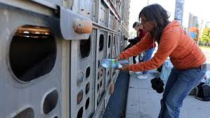Anita Giving Pig Water