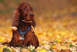 Dog in the Fall Leaves
