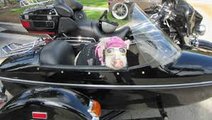 Baby Banks in Sidecar
