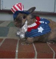 Bailey the rabbit