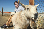 Pygmy Goat returned to petting zoo
