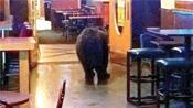 Bear in Lonigans Saloon Nightclub & Grill