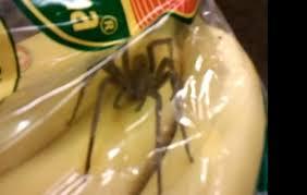 Venomous Brazilian Spider