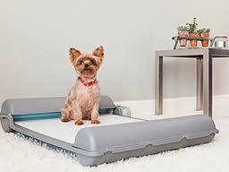Dog Using BrilliantPad