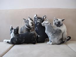 Lifelike pet pillows