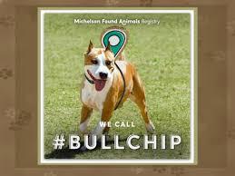 BullChip Logo Dog