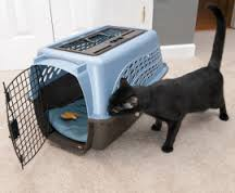 Cat Sniffing Carrier in Home