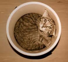 Cat In Bucket