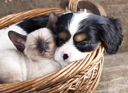 Cat and Dog Cuddled Together in Basket