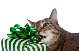 Cat Opening Gift