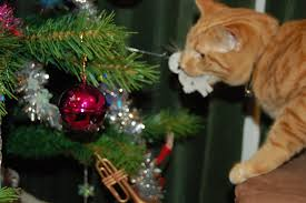 Cat Playing With Ornament