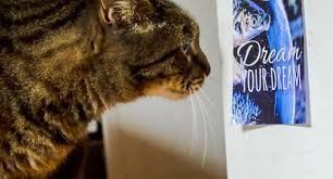 Cat Looking at Poster