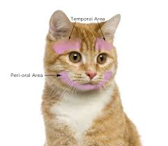Cat Stroking Face Chart