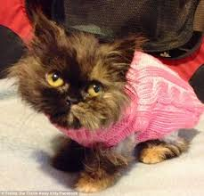 Cat Wearing Sweater