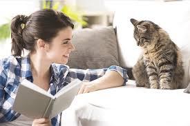 Cat Training Program