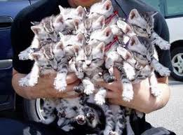 Person holding lots of cats