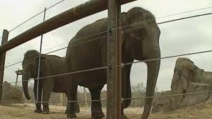 Elephants Chai and Bamboo