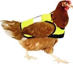Chicken Jacket