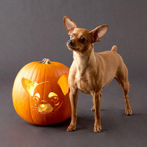 Download the Chihuahua Pumpkin Stencil