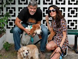 George and Amal Clooney with Dogs
