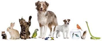 Common Pets