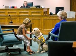 Dog in courtroom with girl