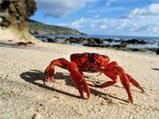 Crab walking on beach