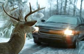 Deer Looking at Car