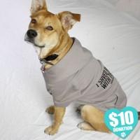 Dog Wearing T-Shirt