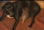 Dog nursing Armadillo