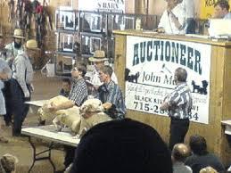 Dog Auction