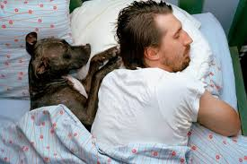 Dog and Human in Bed