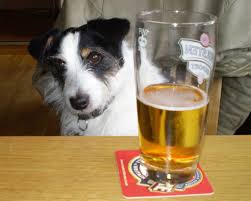 Dog with glass of Beer