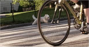 Dog running alongside bike