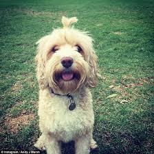 Dog Bun