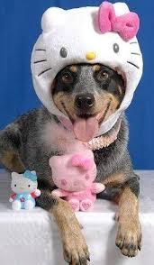Dog in Cat Costume