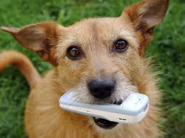 Dog chewing on cellphone