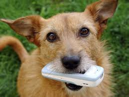 Dog Chewing on Smartphone
