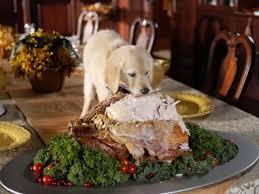 Dog On Table Eating Turkey