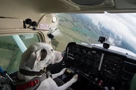 Dog Flying a Plane