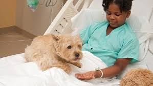 Dog Visiting Woman in Hospital
