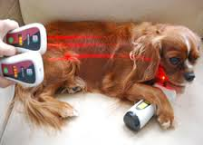 Dog Undergoing Laser Therapy