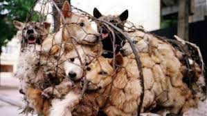 Dog Meat Trade Dogs