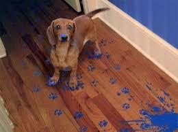 Paint on Dog